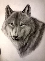 Wolf's portrait by LauriieT