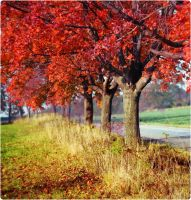 passion for autumn by MurphyL6