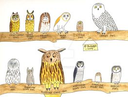 Owls of Europe by Bushdog4