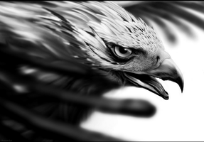 Eagle Portrait by LittleFlashes