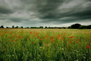Dark Poppies II by Dave-Ellis