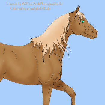 colored horse by mandykolb15