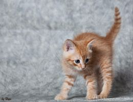Scary Scary Big Red Kitten by Hope72