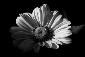 D6907bw by Placi1