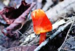 Orange Mushroom by LilDizzyDizaster