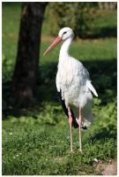 Stork by DysfunctionalKid