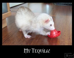 Tequila-Ferret by Oukami-SuGo