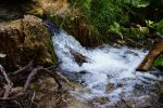baby waterfall by Zoyra