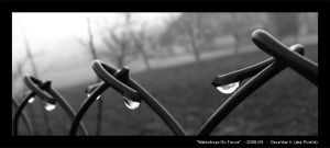 Waterdrops On Fence by Pixelis