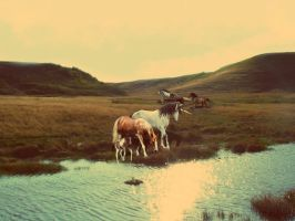 A Day in the Life: Sages Herd by ivyheartmoonlight