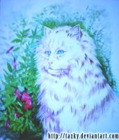 Persian Cat by tazky