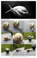 STOCK - Backyard Snail Macro by mesign