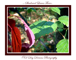 .:Shadowed Leaves Three:. by DayDreamsPhotography