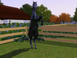 Sims 3 Horse Marking Download: SabinoPack1 by Isolated-Design