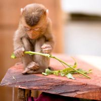 Little Monkey II by bjorntoday