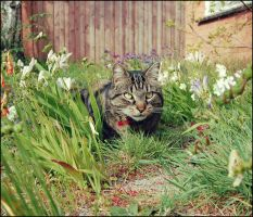 Fergus in the Fresias by lacerate666
