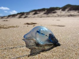 Washed Ashore by GoblinFish
