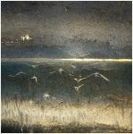 Midnight birds keep me awake by AiniTolonen
