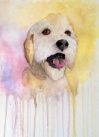 Dog Painting (Benny) by LordColinOneal
