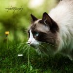 .lou with the flower. by awphotoart