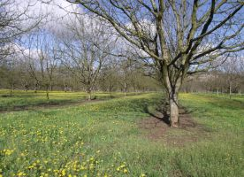 Spring - walnut trees 01 by HermitCrabStock