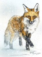 Fox in Snow by silvercrossfox