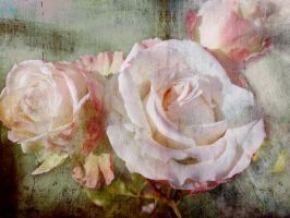 Roses for the Snowy Day by myrnajacobs