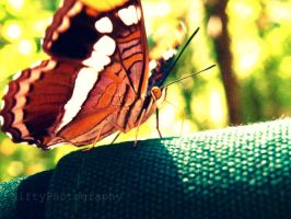Butterfly Glamour Shot 2. by NiftyPhotography