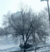 cold-coloured tree by entemin