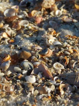 Sea Shells by the Sea Shore by lilstarshine2002