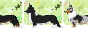 Indigos Cardigan corgi entries by AixaRawr