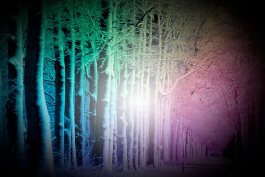 Prismatic Forest by Phishf00d