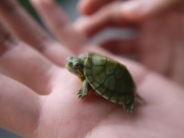 Baby Turtle by geek96boolean10