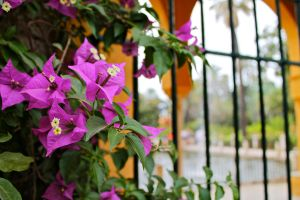 Caged Flowers by gopman766