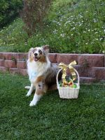 Riley with her Easter Basket by Groovygirlsuzy17