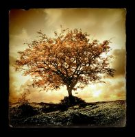 In october II by raun