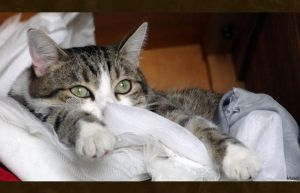 Drizzit likes my fabric closet by Lelahel-Clothes