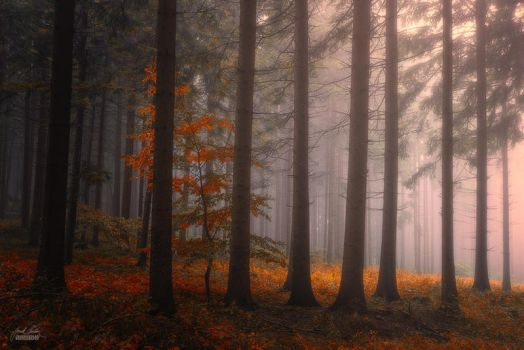 -The light shine on everyone equally- by Janek-Sedlar