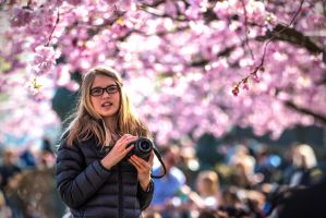 The Japanese Cherrytrees by attomanen