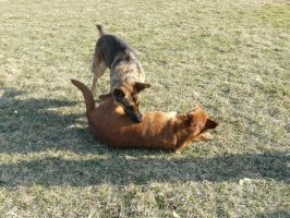 Dog Fight Stock 05 by Unseelie-Stock