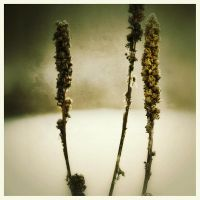 iPhoneography,  Three Still  Standing by Gerald-Bostock