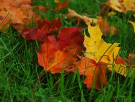 Leaves by zaartarmo
