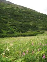 Crow's Pass Mountains Field 2 by prints-of-stock