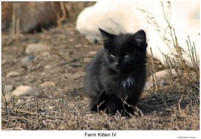 Farm Kitten IV by hunter1828