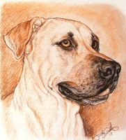 Portrait of a Dog by greyviolett