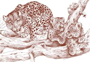 LEOPARDS-SCETCH by Repaul