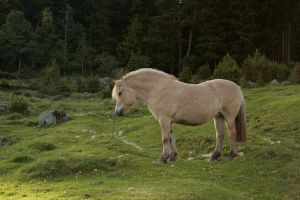 Fjord mare 2011b by Mirk-stock
