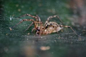 Spider by mordoc-stock