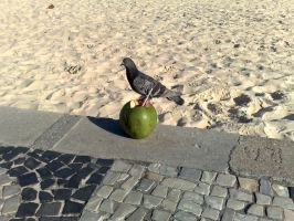Put the pigeon on the coconut by TheDrifterWithin