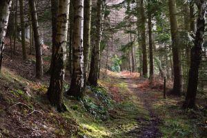 A path through Chillingham Woods by Mr-Wanonymous